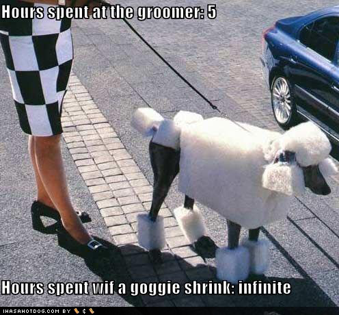 Cães (Funny Dogs) Funny-dog-pictures-cubist-poodle