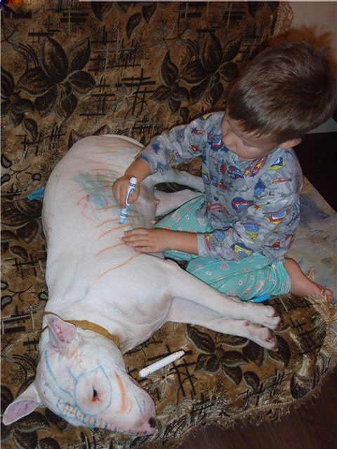 Why you should NEVER leave small children alone with dogs