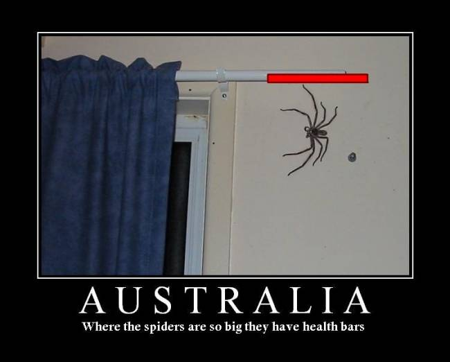 Hella big ugly Australian spider