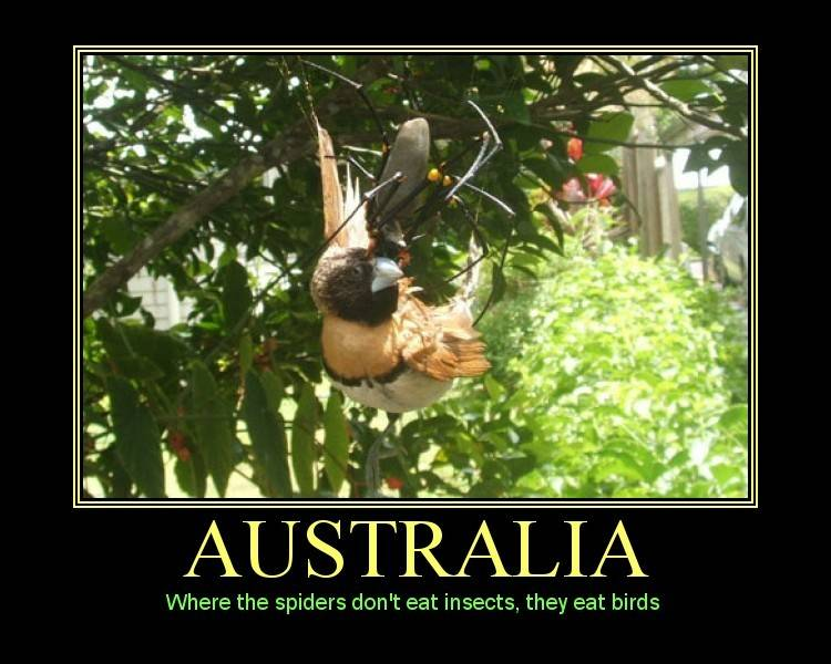 Australia:  Where the spiders don't eat insects, they eat birds!