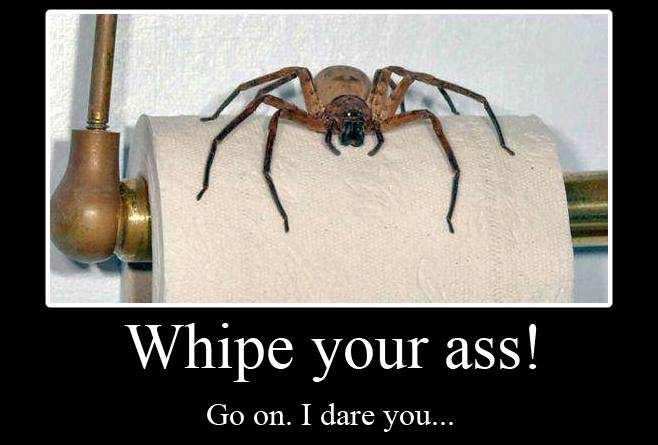 Australian spider on toilet roll - ERK!