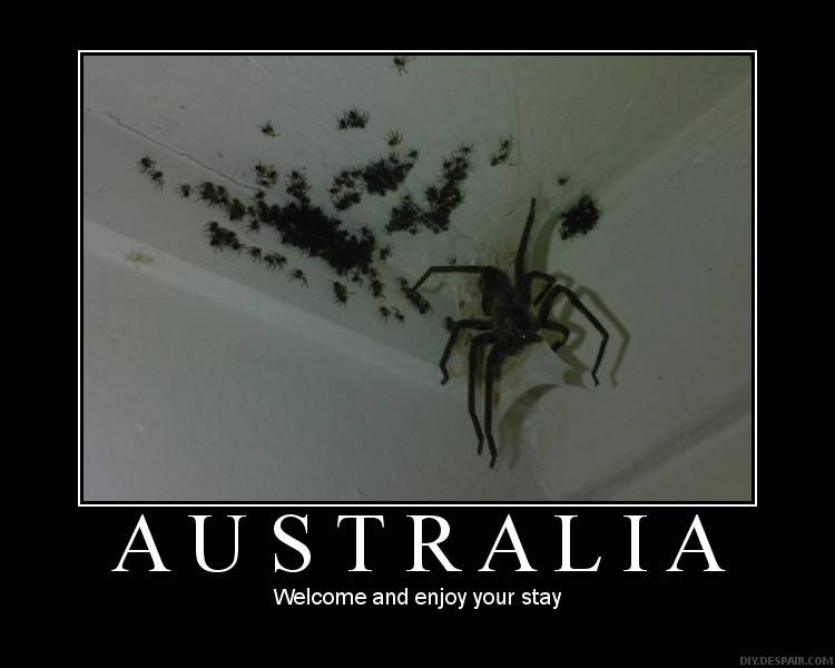 Spiders!  Welcome to Australia...