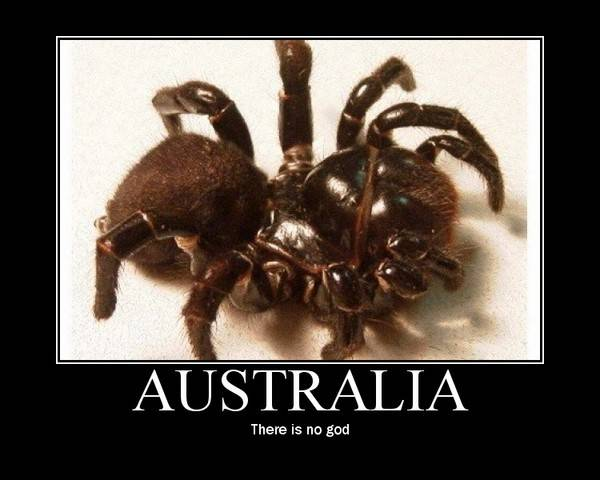 "This is my Australian spider - we call him ""Fluffy"""