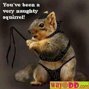 funny-pictures-a-very-naughty-squirrel-1xq